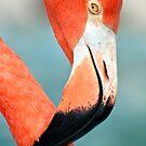 Pink flamingo close up. by FER737NG