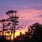 colourful morning sky by tamarama