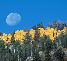 Moonset Over Fall Colors in Jackson Hole by A.M. Ruttle