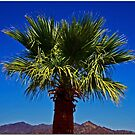 Palm Desert by Chet  King