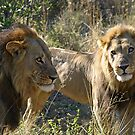 A powerful coaltion of two !(Common let`s go bro!) by jozi1