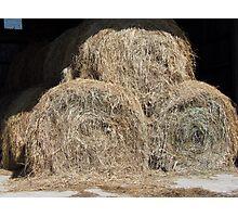 Hay, Hay, Hay Photographic Print