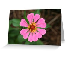 Pink Zinnia - Omega - 7-10 Greeting Card