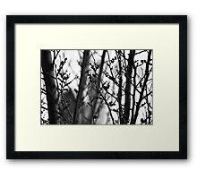 Through branches. Framed Print