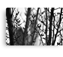 Through branches. Canvas Print