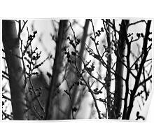 Through branches. Poster