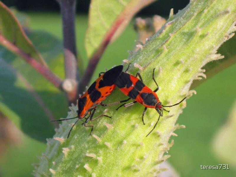 Quot Orange Bugs Quot By Teresa731 Redbubble