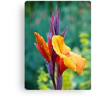 It's NOT a Bird of Paradise (Flower) Canvas Print
