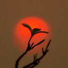 Frangipani  and setting sun by Brian Bo Mei