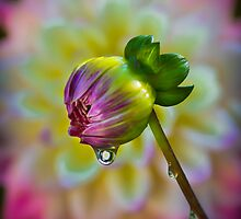 Dewdrop..... by PCChang