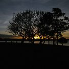 Dark Grove by tablelander