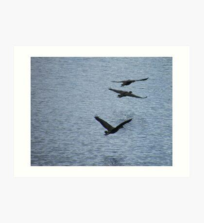 Duck Squadron Art Print