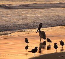 Beach Buds by JamesA1