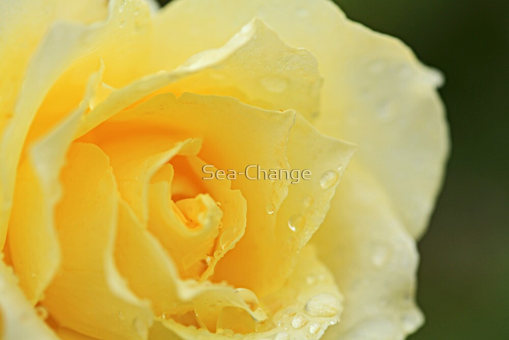 Raindrops on Roses #5 by Sea-Change