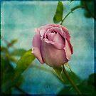 Lavender Rose by Lynn Starner