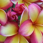 Rainbow Frangipani - Warming by jono johnson
