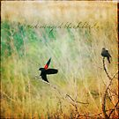 Red-winged Blackbird Pair by Lynn Starner