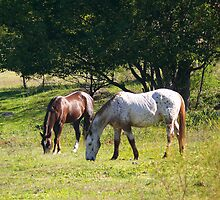 Horses by PollyBrown