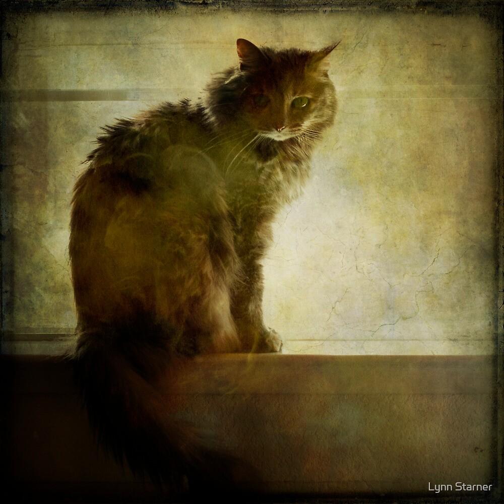 Mysterious Chloe by Lynn Starner