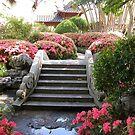 Springtime, Chinese Friendship Gardens, Sydney, Australia. by kaysharp