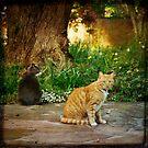 Cats in the Garden by Lynn Starner