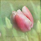 Tulip by Lynn Starner