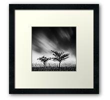Two Blackthorns Framed Print