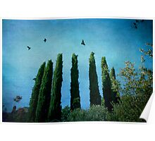 Cypress Trees with Crows Poster