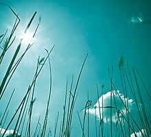 Reeds with Sun by Krisztian Sipos