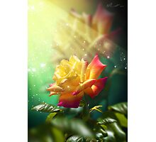Juicy Rose Photographic Print