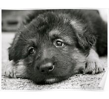 Puppy Dog Eyes- (black and white) Poster