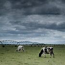 Rural Victoria - milking the photographic opportunities by Mark Elshout