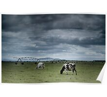 Rural Victoria - milking the photographic opportunities Poster