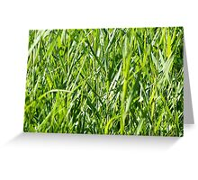 green gras reed Greeting Card