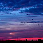 Electric sunset by mamuphoto