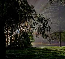 0647 Through the trees by DavidsArt