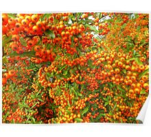 Bangor Berries.......................Most Products Poster