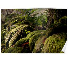 Light on Moss Covered Wall Poster