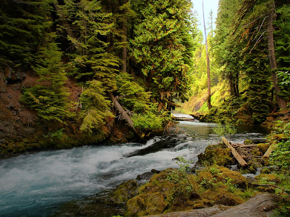 Upper McKenzie River by Charles & Patricia   Harkins ~ Picture Oregon