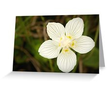 The fascinating little flower of parnassia Greeting Card