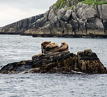 On the Rocks by chrokeefe