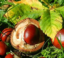 Autumn has arrived! The conkers have fallen! by weecritter
