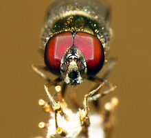 Tiny Hoverfly - Correct Me If I Am Wrong ;-) by Toni Kane