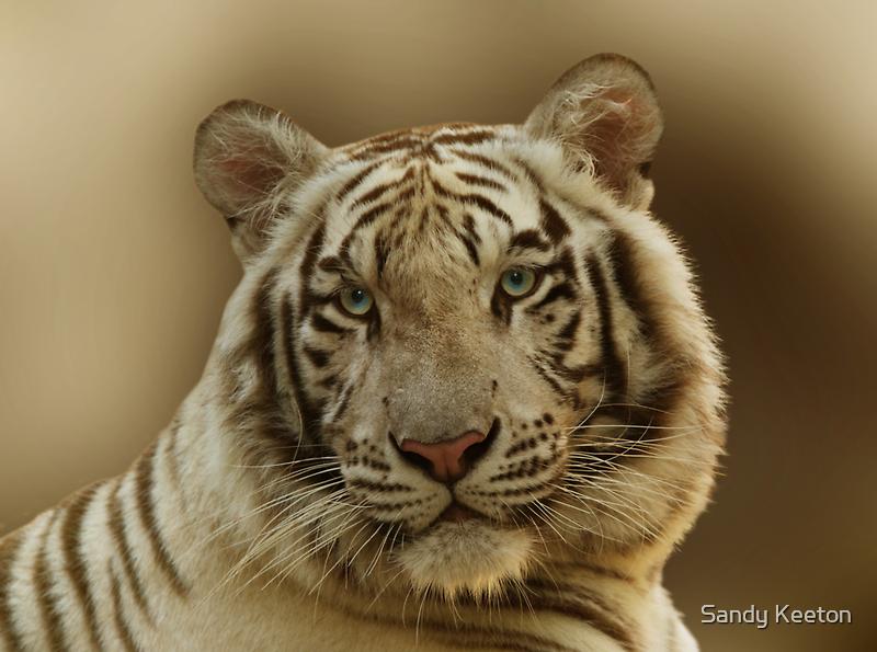White Tiger by Sandy Keeton