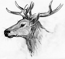 Red Deer by Moonandsixpence