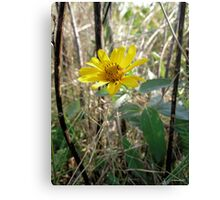 Standing Alone in the Forest Canvas Print