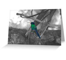 Mango Hummingbird Greeting Card