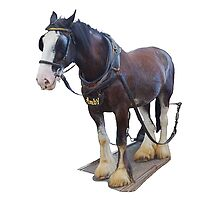Isle of Man Douglas Horse Trammer Amby by youmeus