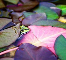 Edible Frog by novopics