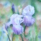 Lavender Iris by arline wagner